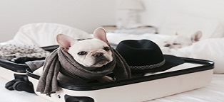 small dog with scarf packed in small suitcase
